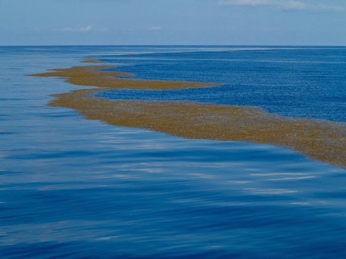 Sargasso Sea Mystery of Sargasso Sea Sea Without Shores or Coastline