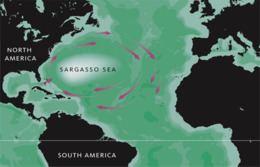 Sargasso Sea httpsuploadwikimediaorgwikipediacommonsthu