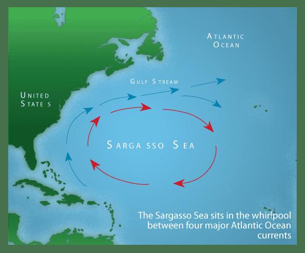 Sargasso Sea The Mysterious Life of the Sargasso Sea Sail Magazine