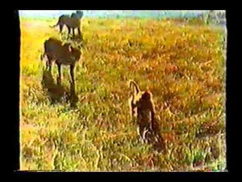 Savana violenta Mondo Diavolo Savana violenta 1976avi YouTube