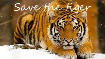 Save the Tiger OfficeMix Save the tiger