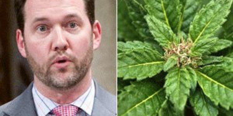 Scott Reid (politician) Tory MP Scott Reid Backed Pot Legalization In Front Of