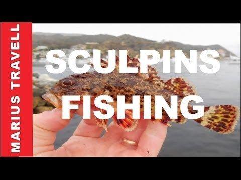 Sculpin Sculpins Fishing In Orange County Deep Sea Fishing YouTube