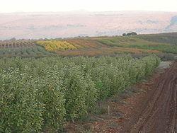 Sde Eliezer httpsuploadwikimediaorgwikipediacommonsthu