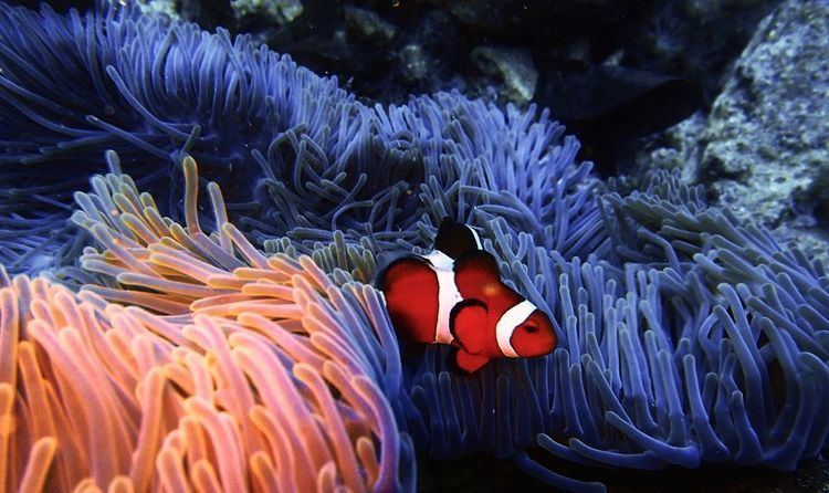 Sea anemone Sea Anemones Sea Anemone Pictures Sea Anemone Facts National