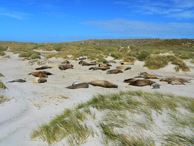 Sea Lion Island wwwtraveltourguidecomfalklandsandpatagonia