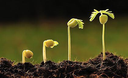 Seed SeedStart Improve Germination Seedling amp Root Growth