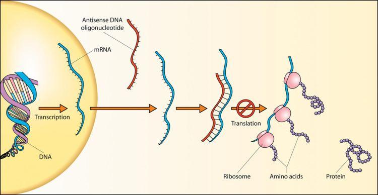 Sense (molecular biology)