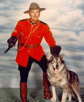 Sergeant Preston of the Yukon (TV series) Husky Hero King and Sgt Preston ARA Canine Rescue inc Siberian