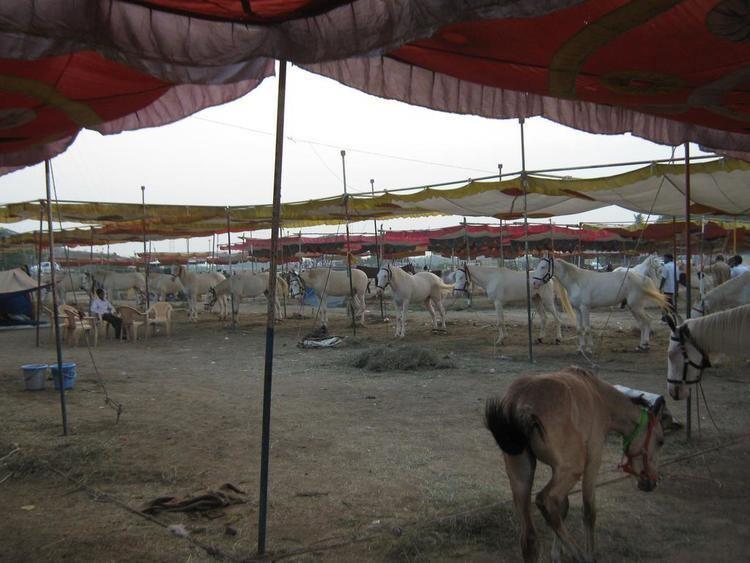 Shahada, Maharashtra images2mygolacom371228757c4f3598aeb17b15fec4678