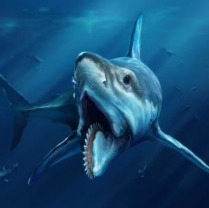 Shark rddmcdncomsfo1cx999cy0cw1277ch1277w