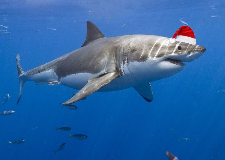 Shark Shark Savers Home