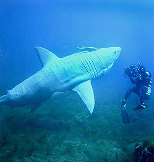 Shark: Mind of a Demon Shark Mind of a Demon with Fabien Cousteau Photos and Pictures
