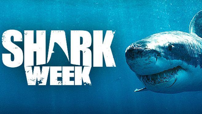 Shark Week moneyinccomwpcontentuploads201605SharkWeekjpg