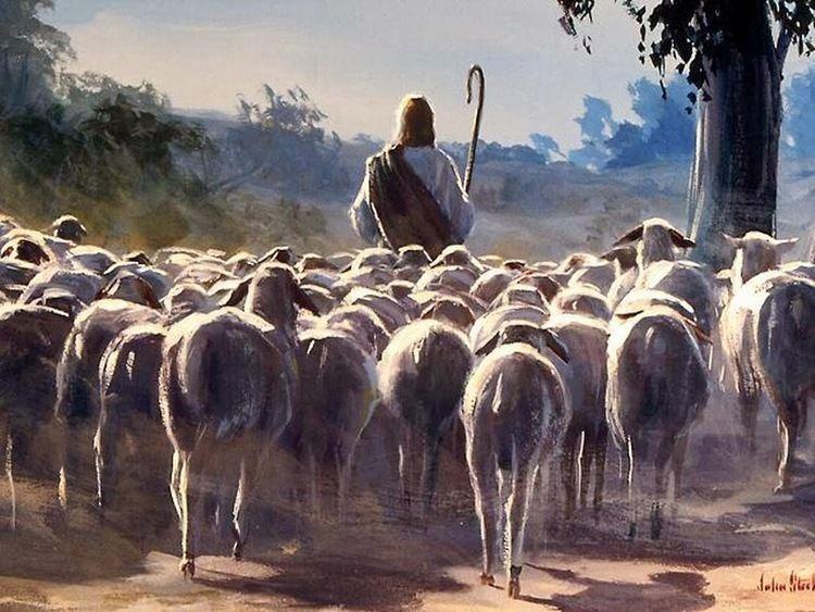 Shepherd https8406c24de5442685c57b57fa5852527c9e8686bcd