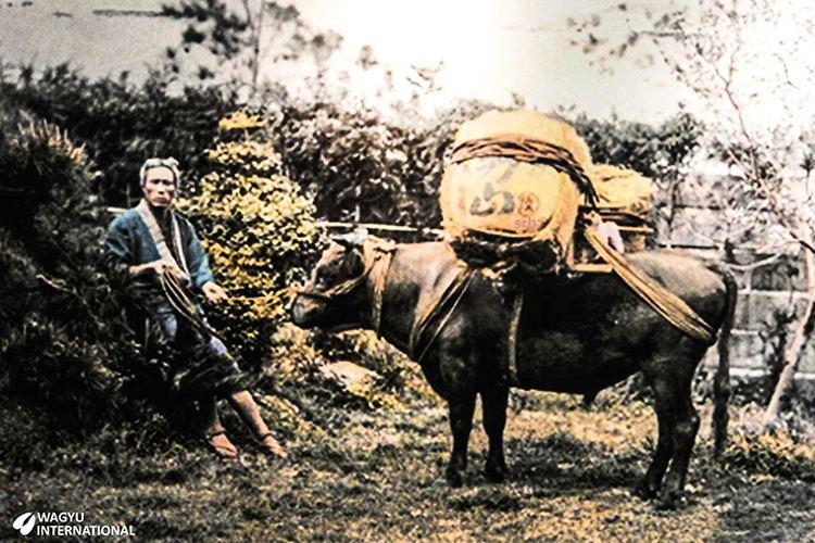 Shiga Prefecture in the past, History of Shiga Prefecture