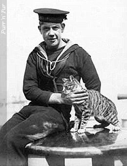 Ship's cat PurrnFur UK Cats in Wartime At Sea Ship39s Cats