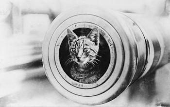 Ship's cat httpsuploadwikimediaorgwikipediacommonsthu