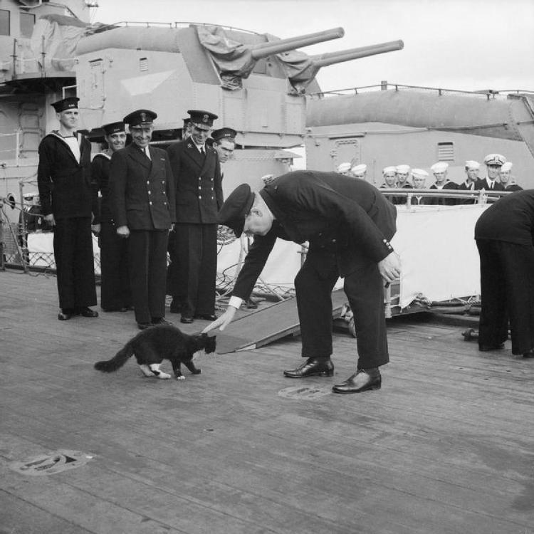 Ship's cat Ship39s cat Wikipedia