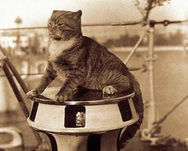 Ship's cat Kittens Of The Sea Nine Legendary Ship39s Cats Petsladycom