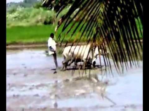 Sholavandan Beautiful Landscapes of Sholavandan