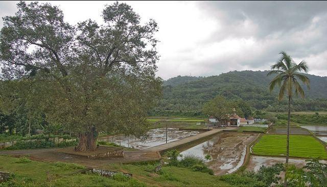 Shoranur Beautiful Landscapes of Shoranur