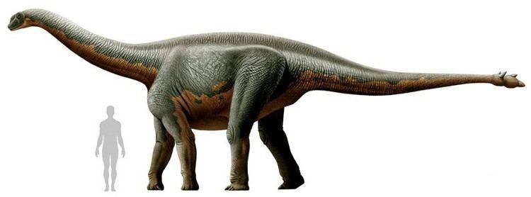 shunosaurus-565e128c-bb1c-4656-8e26-e6bddbaaf60-resize-750.jpeg