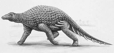 Silvisaurus The Dino Directory Silvisaurus Natural History Museum