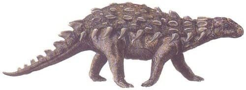 Silvisaurus Silvisaurus Pictures amp Facts The Dinosaur Database
