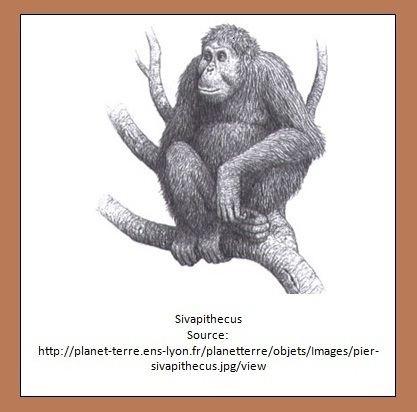 Sivapithecus designeranimals Sivapithecus