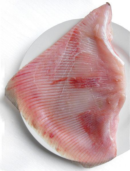 Skate (fish) Skate Fish Culinary Profile Chefs Resources