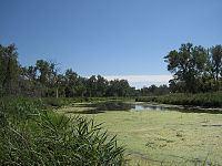 Slough (hydrology) httpsuploadwikimediaorgwikipediacommonsthu