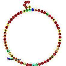 Small nucleolar RNA SNORD44 httpsuploadwikimediaorgwikipediacommonsthu