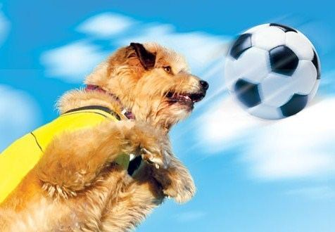 Soccer Dog: European Cup Soccer Dog European Cup 2004 review by That Film Klown