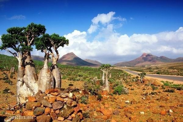 Socotra Beautiful Landscapes of Socotra