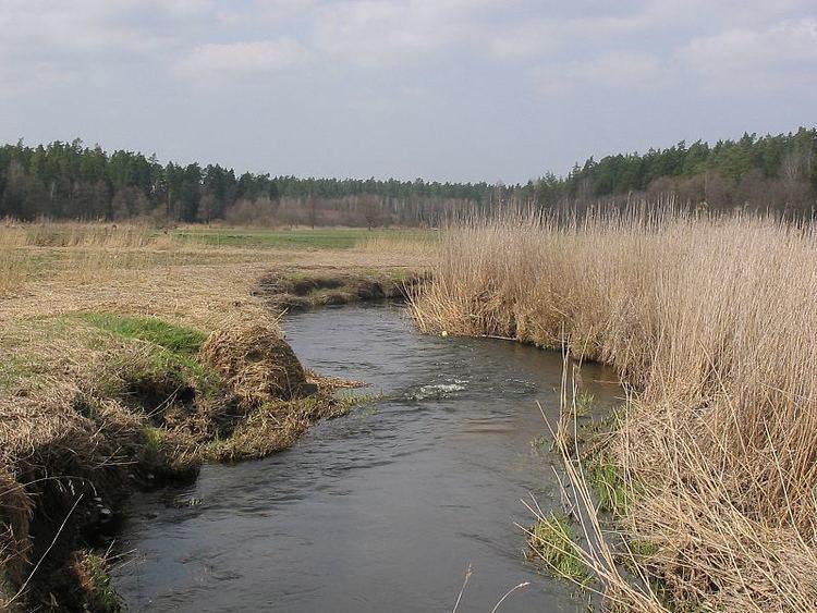 Sokołda (river) wwwartfishbialystokpllowiskasokoldaIMG0021jpg