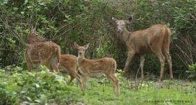 Someshwara Wildlife Sanctuary Someshwara Wildlife Sanctuary