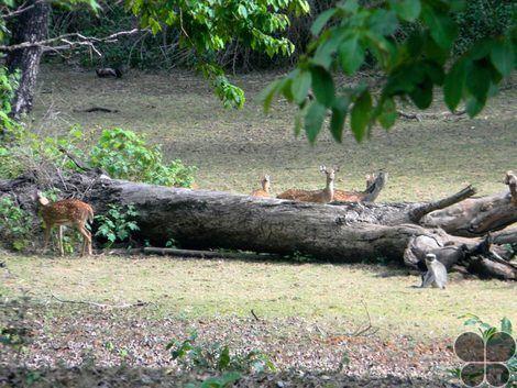 Someshwara Wildlife Sanctuary Someshwara Wildlife Sanctuary Someshwar Karnataka