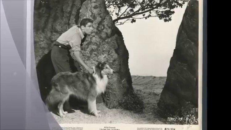 Son of Lassie Peter Lawford in Son Of Lassie 1945 YouTube