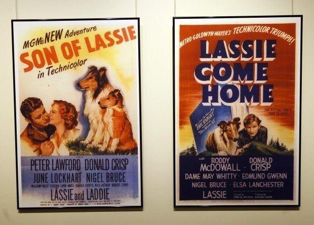 Son of Lassie Son of Lassie Alchetron The Free Social Encyclopedia