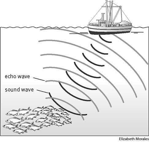 Sonar Sonar Define Sonar at Dictionarycom