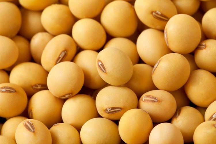 Soybean Minnesota Soybean Processors Quality Soybean Products