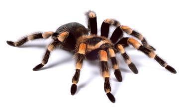 Spider BBC Earth Spider