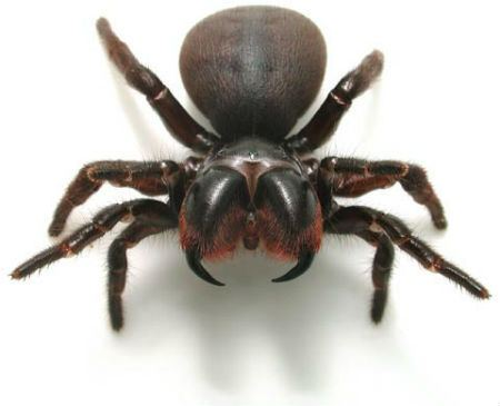Spider Spider Facts 24 Facts about Spiders FACTSlides