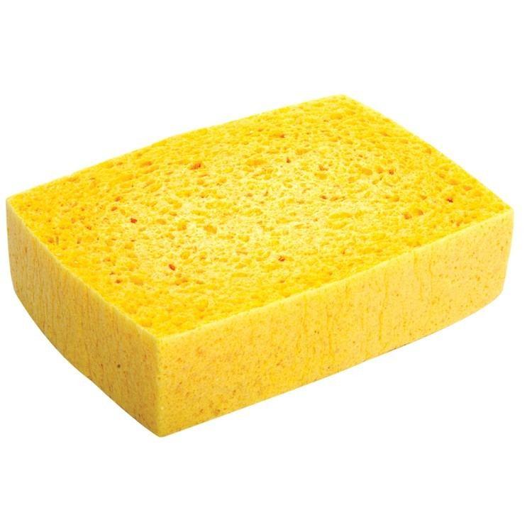 Sponge Lincoln Sponge
