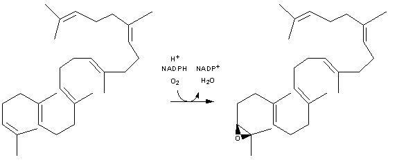 Squalene monooxygenase