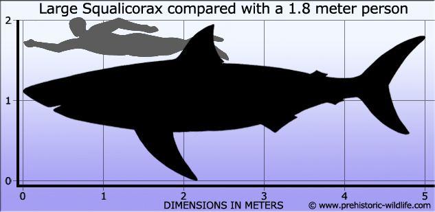 Squalicorax wwwprehistoricwildlifecomimagesspeciesssqua