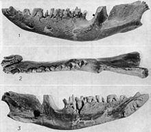 Stagodontidae httpsuploadwikimediaorgwikipediacommonsthu