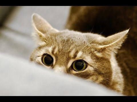 Stalking Cat Funny Stalking Cat Video Compilation 2014 HD YouTube