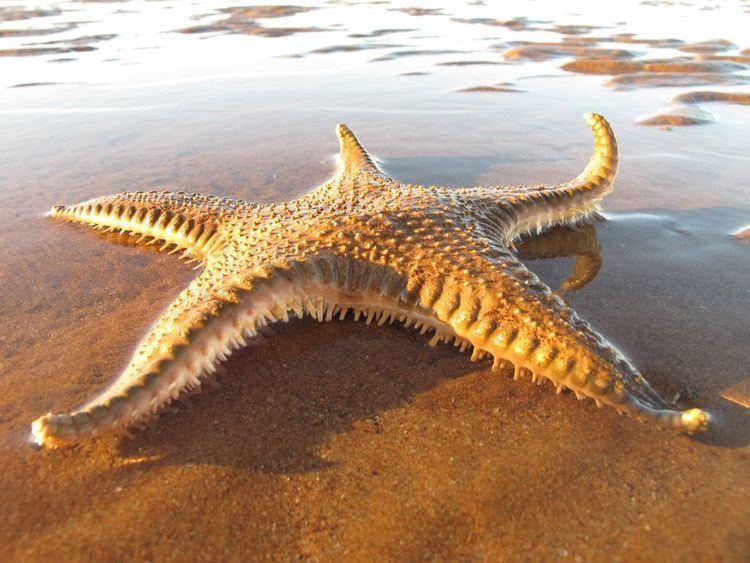Starfish Starfish Sea Stars Starfish Sea Star Pictures Starfish Sea